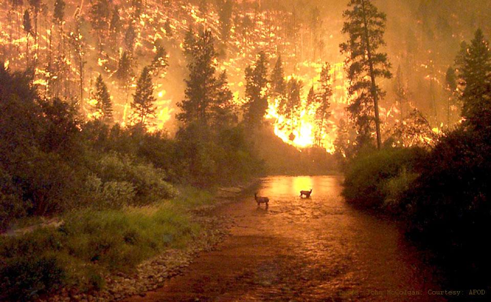 fires_mccolgan_960